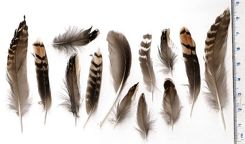 mystery_feathers